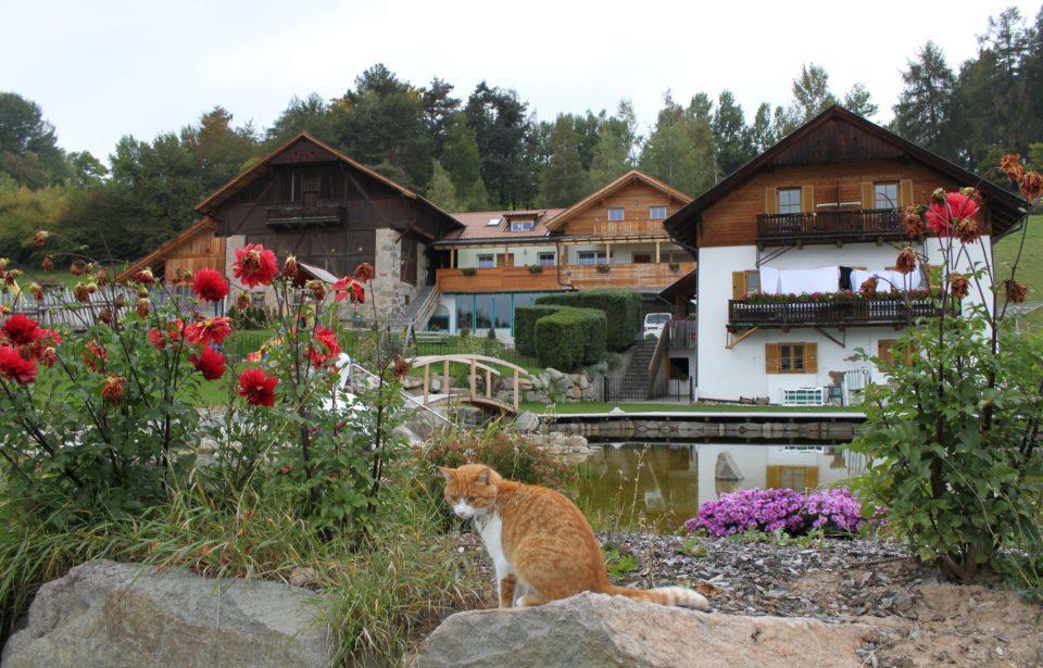 Massivholz-Bauernhof Ebenhof